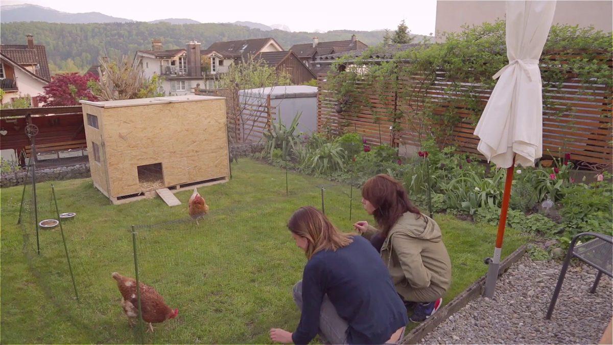 Hühnerstall: DIY!
