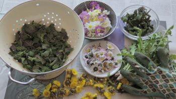 Essbare Pflanzen: Findet man überall in der Stadt